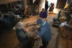 shearing2009_1_-49-300x201_2009