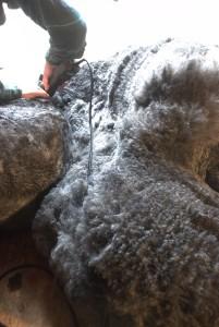 shearing2009_2_-07-201x300_2009