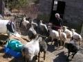ShearingPost_20120312_06
