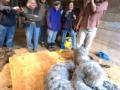 shearing2009_1_-41-201x300_2009