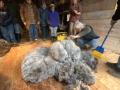 shearing2009_1_-45-300x201_2009