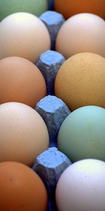 multi-colored eggs in carton