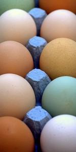 multi-colored eggs in carton