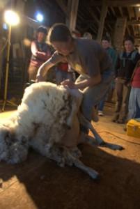 shearing 2010