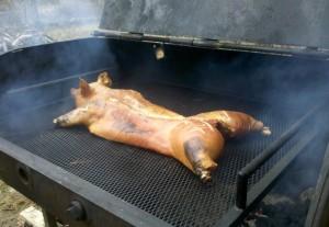 half baked pig