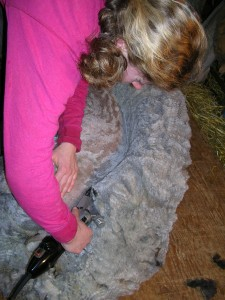 shearing grey