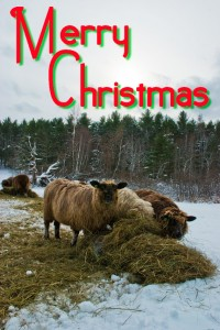 color photo: Coopworths in the snow -- text: Merry Christmas